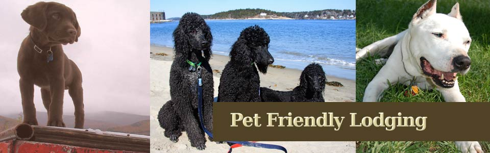 Pet Friendly Hotels, Dog Friendly Lodging